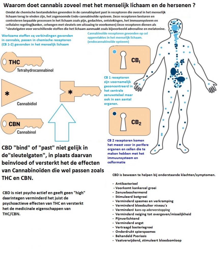 CBD en het lichaam