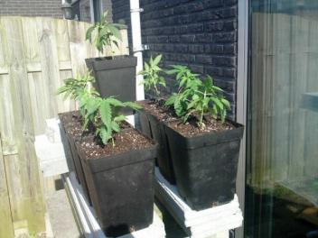 Plantjes buiten